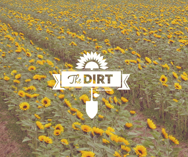 The Dirt - A Brief Intro.