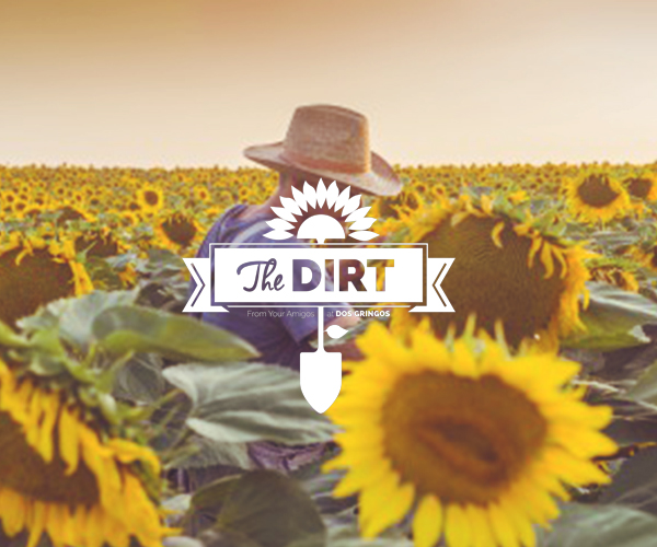 The Dirt - August 2015