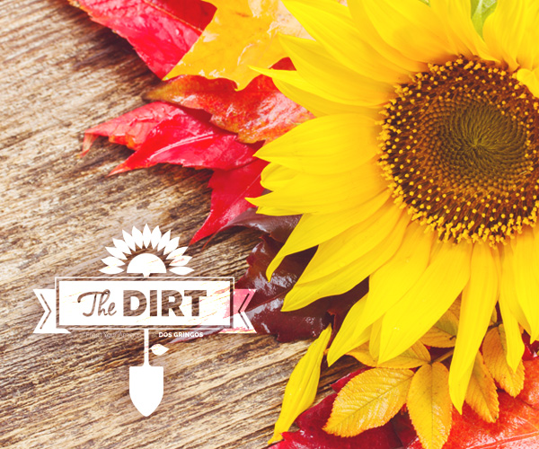 The Dirt - California Dreaming Of Funky Fall Offerings